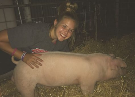 Sophomore Halle Barkley meets Fancy for the first time. Barkley will take this pig to the Carson County Junior Livestock Show and the Fort Worth Stock Show and Rodeo.